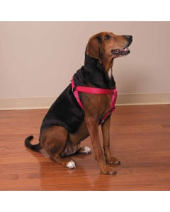 Casual Canine Two-Step Harness