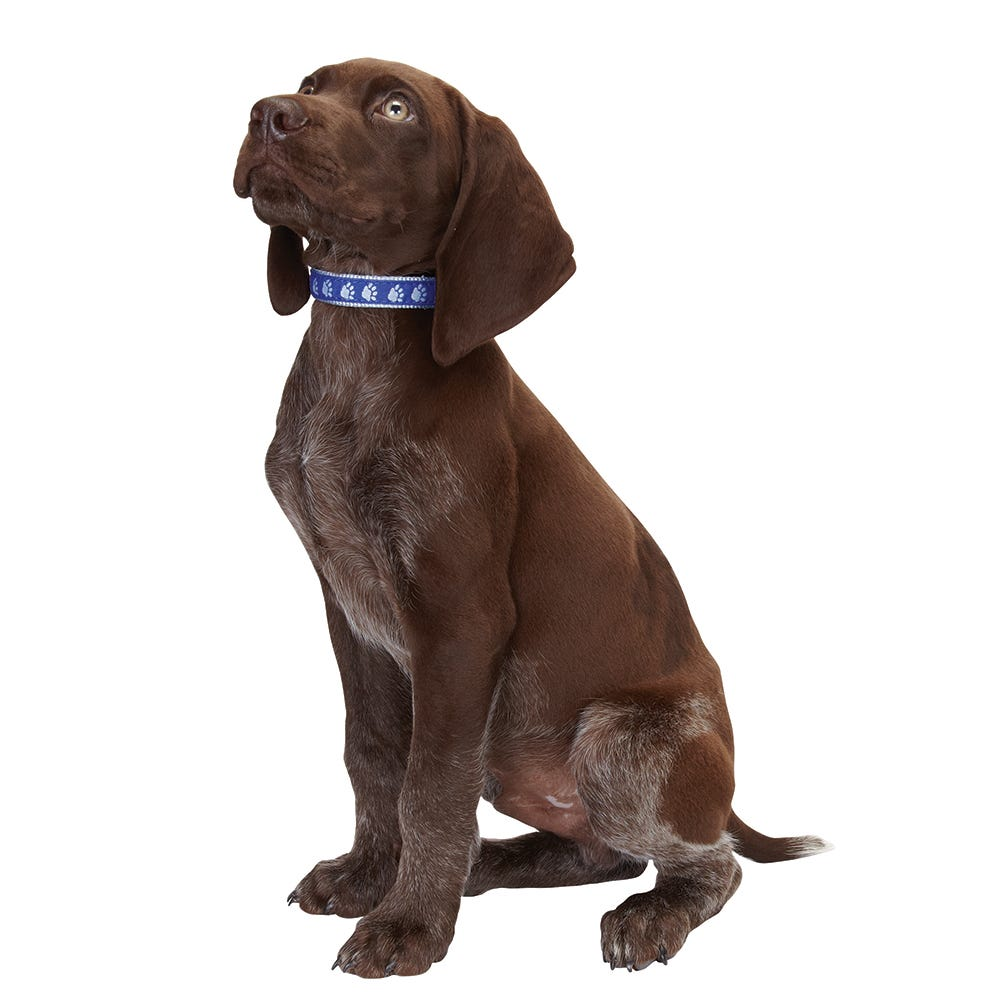 Collars, Leads & Harnesses