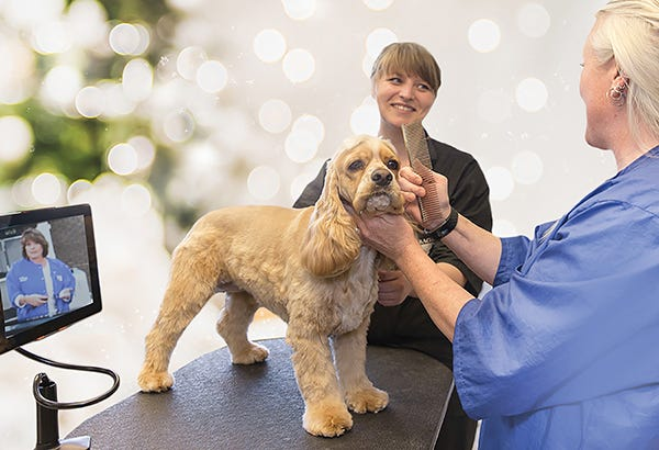 Dog Grooming for the Holidays